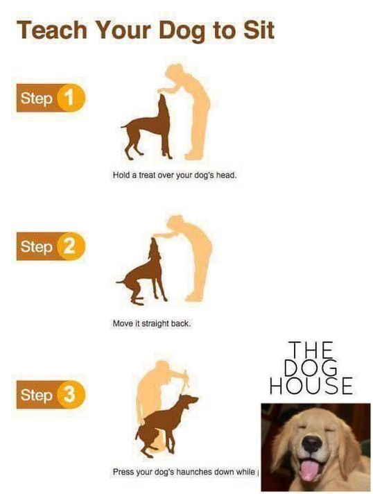 Stop Dog Jumping And How To Train Your Dog Check The Pic For