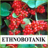 Bei Asklepios-seeds finden Sie Saatgut der Ethnobotanik, Samen von Arzneipflanzen, Heilpflanzen-, Heilkräuter-, Zauberpflanzen, Exoten Sämereien und viele schöne Raritäten und Samen seltener Pflanzen