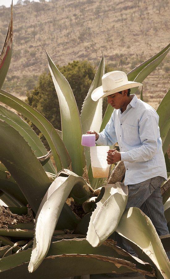 El Pulque, La bebida nacional de México
