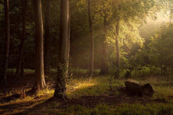 Природа,красивые фото природы: моря, озера, леса