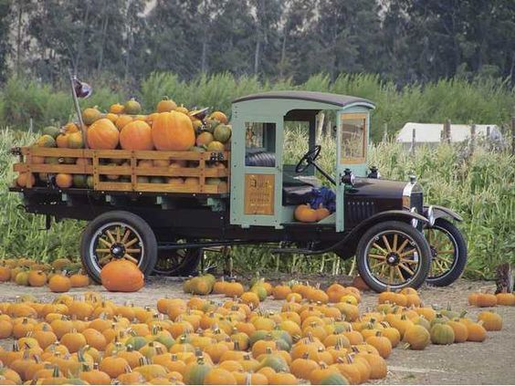 It's almost time for Pumpkins!