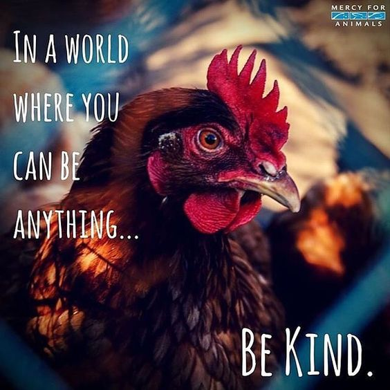 "there is no such thing as ""kind"" exploitation and ""kind"" irreverence for life. go vegan.:"
