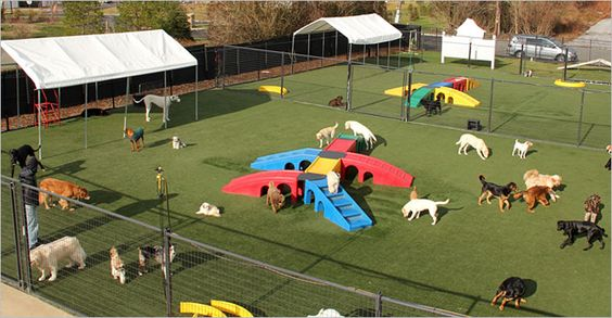 Dog Day Care Monmouth County Nj