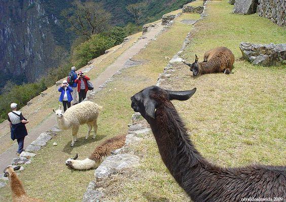 Machu Picchu , voilà !  ( II ) - Machu Picchu, Cusco