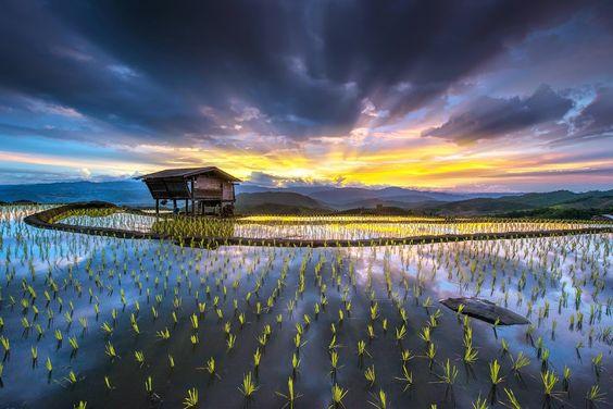 Mae Jam rice terraces by sarawut Intarob #Sun #landscape #nature #photo #image