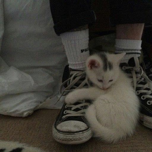 Google ไดรฟ ล กแมว ช ว ตป ก แมวน อย
