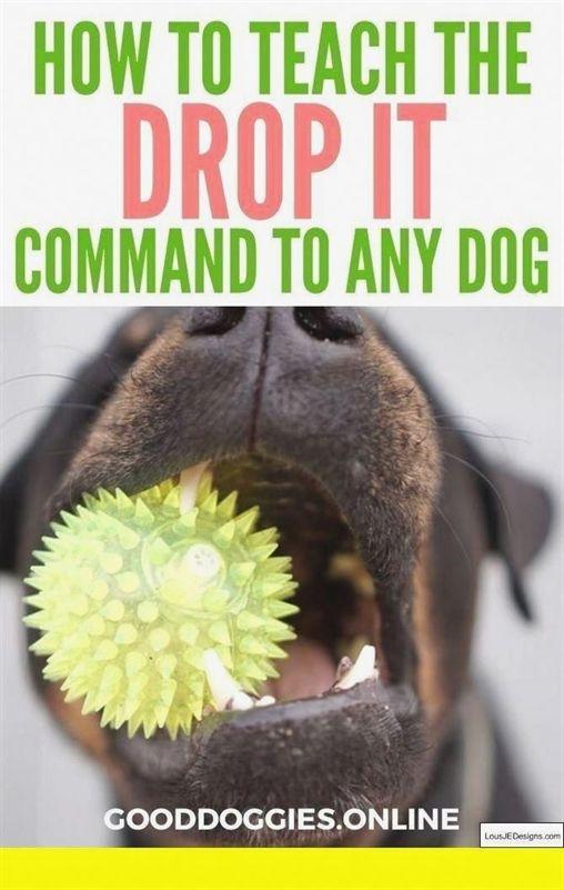 Training The Best Dog Ever Dog Training Methods Comparison Dog