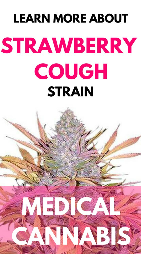trawberry Cough delivers a fruity sweetness and a clear-headed high. This sativa-dominant strain of cannabis truly smells and tastes like strawberries. Its exact origin is well-disputed in the medical marijuana world.