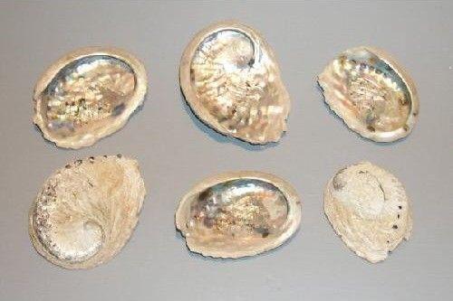 Schelpen Abalone http://www.bissfloral.nl/blog/2014/01/17/schelpen-abalone/