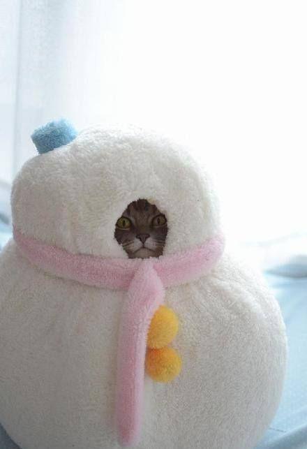 Cute snowcat. #cat
