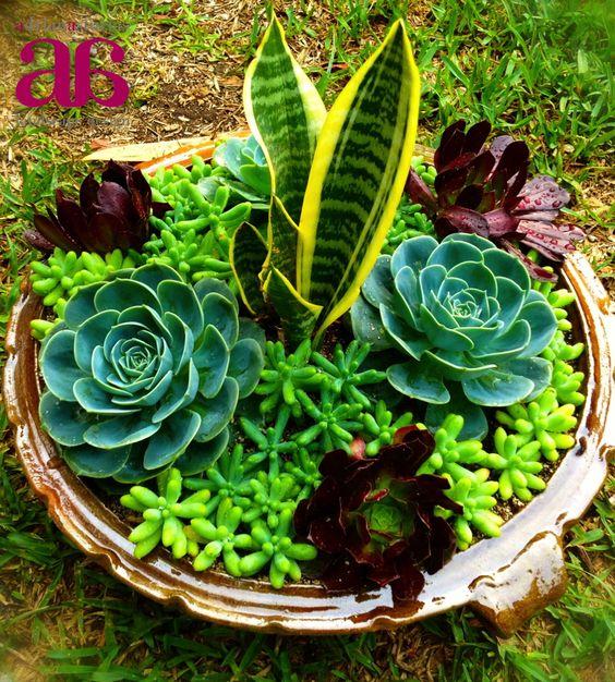 Apaste con suculentas jardines peque os pinterest for Matas ornamentales
