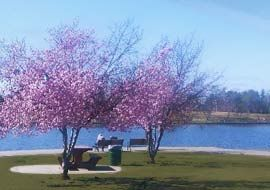 Lakes cherry blossoms and blossoms on pinterest for Balboa lake fishing