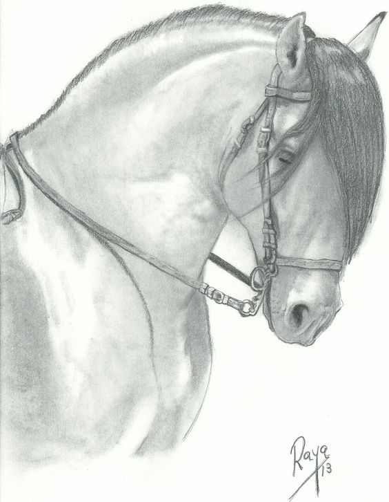 Caballo andaluz, dibujo a lápiz, andalusian horse   Z