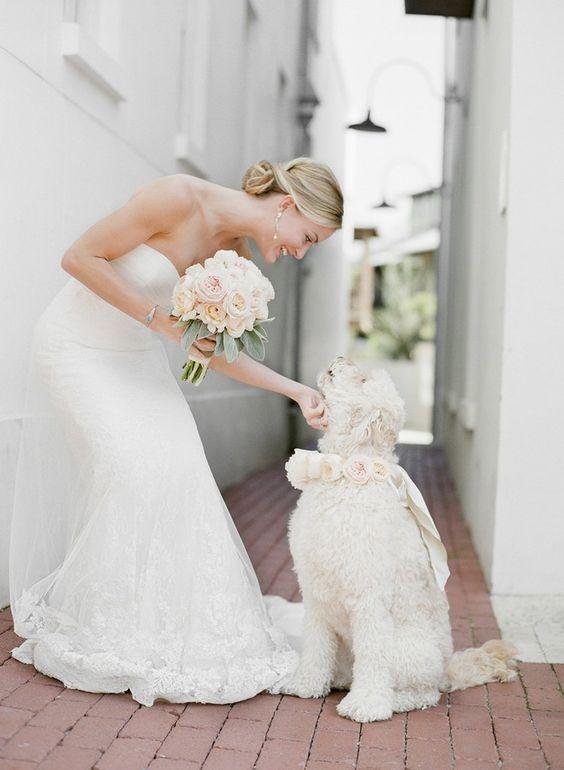 photos de mariage romantique avec chien chien blanc décoré d'un collier en fleurs blanches