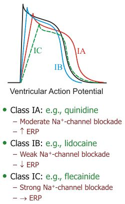 Ventricular action potential with Class IA, IB and IC antiarrhythmic drugs. #pharmacology #cardiology