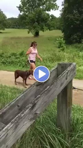 A Mulher E O Cachorro Na Estrada