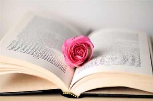 Rosa no livro - Rose, bonito, romântico, Flor, Pétala, Rosa Romântico, bonito Rose, Rose Petal, Fotografia de Rosa, Rose Romantic Flower
