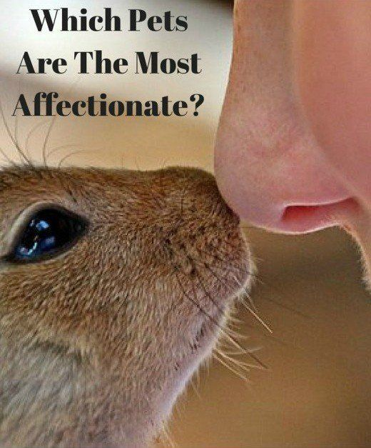 Which Animals Make The Most Affectionate And Cuddly Pets Rabbit