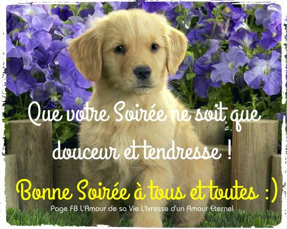 Bonne Soirée à tous et toutes :):