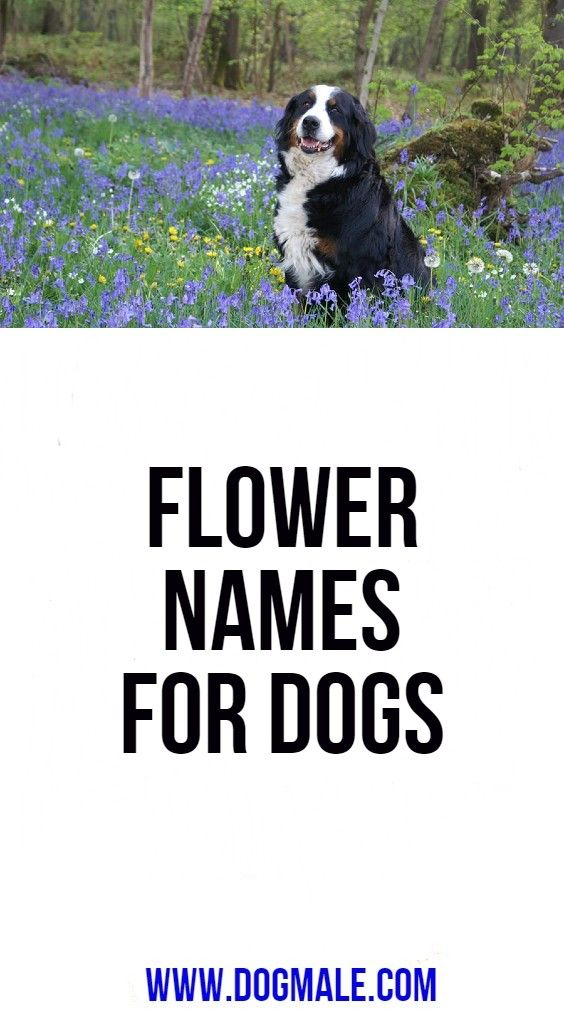 Flower Names For Dogs Female Dog Names Flower Names Dog Names