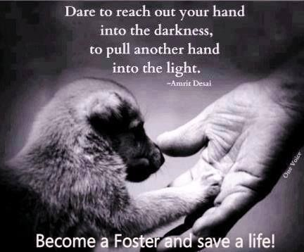 foster or adopt or both!!!