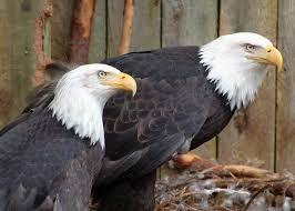 Resultado de imagem para Eagles together
