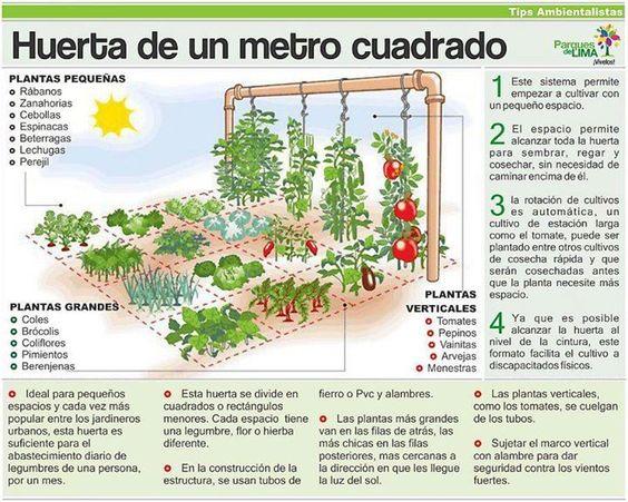 Horta em um metro quadrado