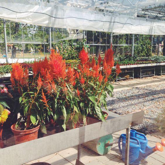 Garden. Botanicals.