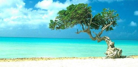 I want to go back to Aruba someday...