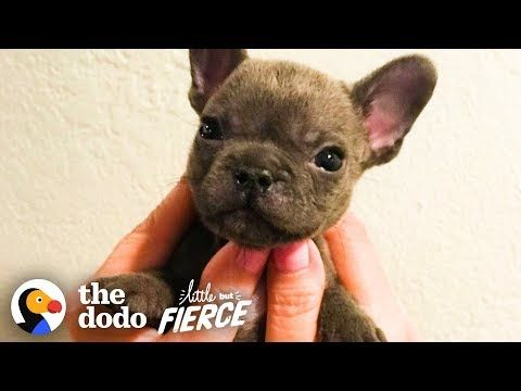 Watch This Sassy Cleft Palate Puppy Argue With His Mom The Dodo