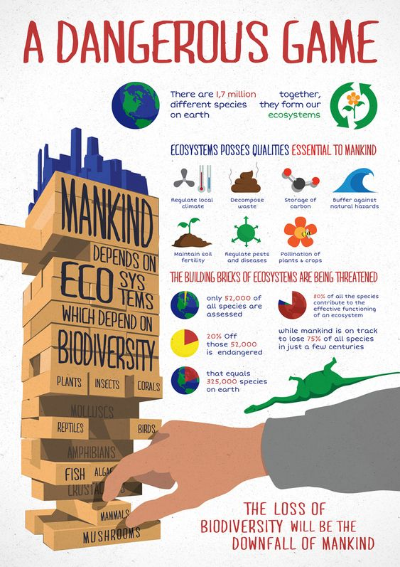 How does our decreasing biodiversity affect us locally?