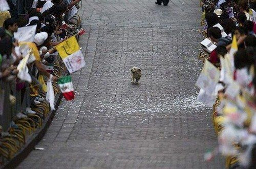 pup on pope parade