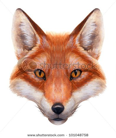 how to draw fox picture