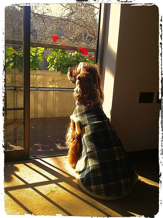 Amaba el sol cálido de otoño...