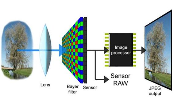 Your camera's sensors play a vital role in processing light and transforming it into an image. It is therefore important to understand your digital camera sensors and how it works so it will help you operate your camera better.