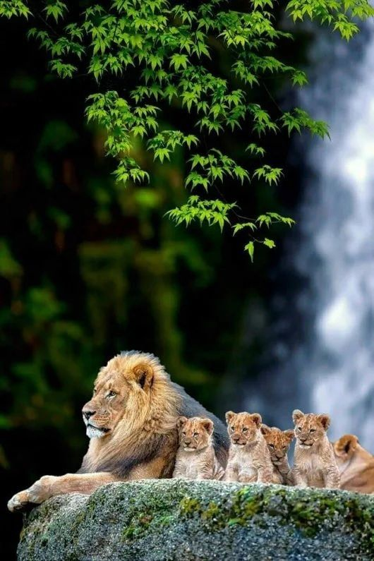 Wildlife Nature Dad With Cubs With Images Majestic Animals