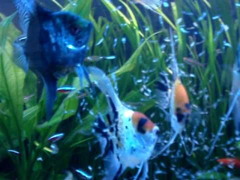 Live Tropical Fish : live tropical fish Favorite Tropical Fish Pinterest Tropical ...