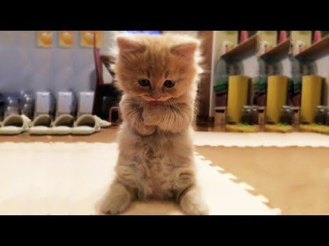 Cute Is Not Enough Funny Cats And Dogs Compilation 14 Youtube Cute Kitten Gif Funny Cats And Dogs Kittens Cutest