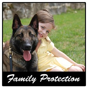 Home Protection Dogs