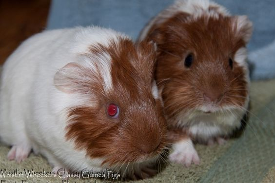 Pin On I Love Piggies