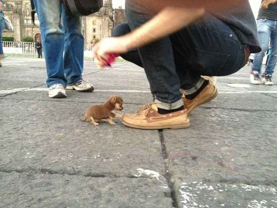 The smallest puppy in the world. | 29 Adorably Tiny Versions Of Normal-Sized Things