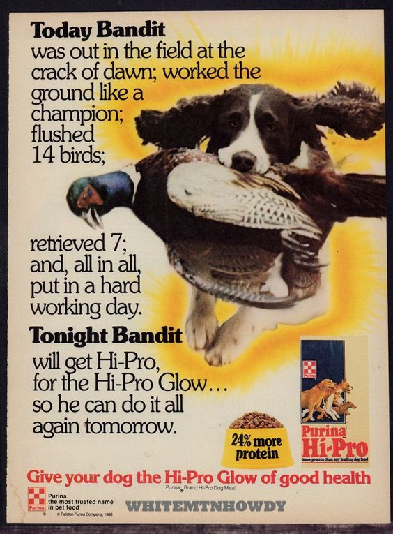 1983 ENGLISH SPRINGER SPANIEL Retrieves Pheasant Purina Dog Food Vintage AD