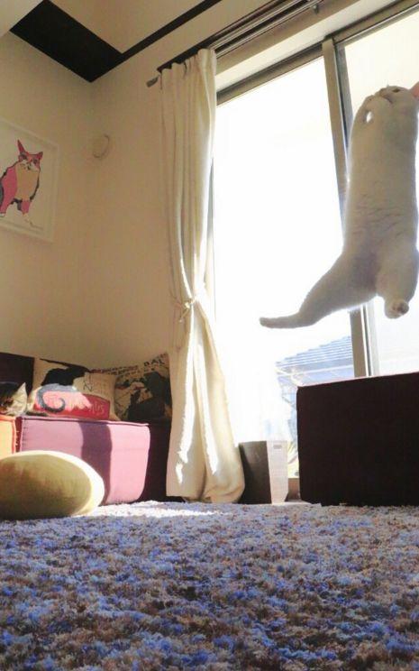ballet cat:
