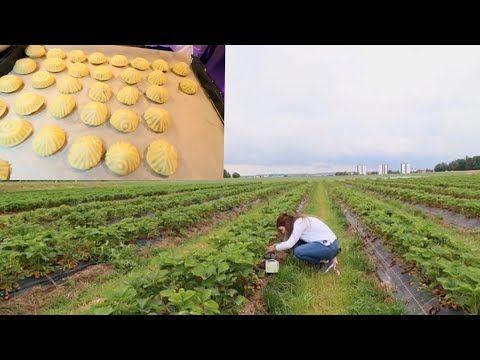الهربه الزينه من مزرعة الفراولة حضرت اسرع معمول بالفستق الشهي Youtube In 2020 Pumpkin Patch Pumpkin Outdoor