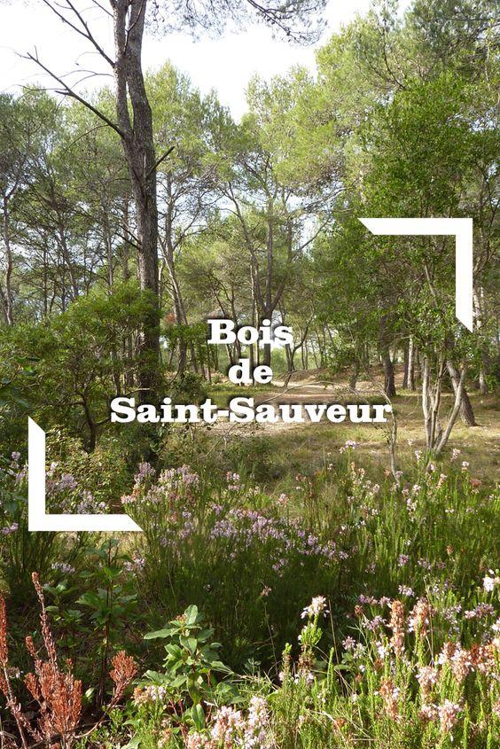 Bois de Saint-Sauveur - Départ : Saint-Clément-de-Rivière (centre UCPA) - Niveau : Très facile - Durée : 2h - Distance : 5km - Dénivelé : 122m - Photo © OTGPSL