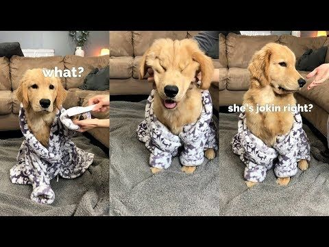 My Dog Has A Spa Day Part 1 Youtube In 2020 Dogs Dog Spa