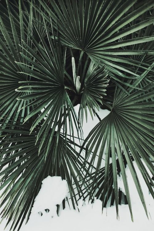 palm fronds tumblr - photo #39