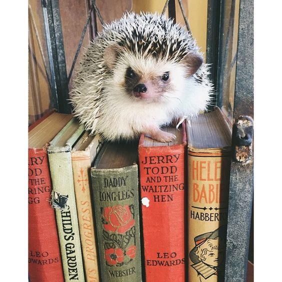 When we spotted this adorable hedgehog, who is an avid lover of books and antiques, we instantly knew he was one after our own hearts. The proof is right there in his name—Ernest Hedgingway. ​: