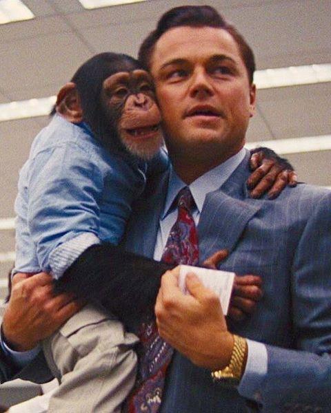Brothertedd Com Wolf Of Wall Street Leonardo Dicaprio Leonardo