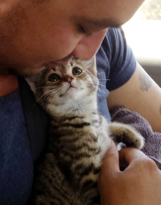 "This man saved a tiny kitten. This is the moment after he brought him into the car and held him in his arms. ""My sister and brother-in-law rescued a kitten. Look at how happy he is!"" Zilara said. Photo: Zilara @ultraviolettoinfraredThe kitten looked into his rescuer's eyes and ..."